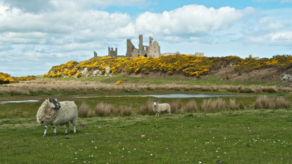 Dunstanburgh Castle panorama